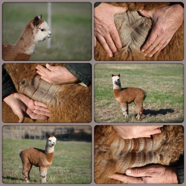 Grey Knight collage