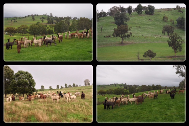 Spottys at Taggerty 1