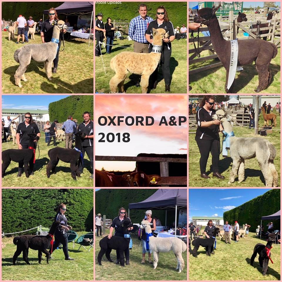Oxford A & P show
